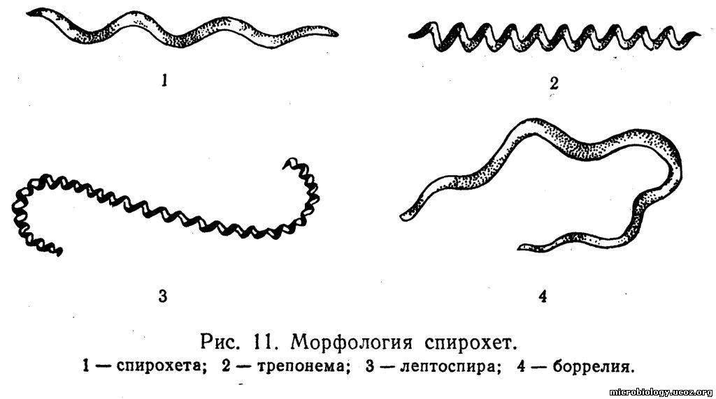 рыбы паразиты в человеке