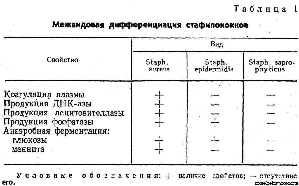 У Staph, aureus обнаружены